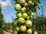 تولید یک میلیون و 270 هزار تن سیب درختی از باغات آذربایجان غربی