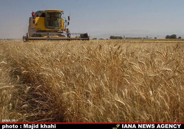 پیشنهاد افزایش ۲۰ درصدی قیمت گندم رد شد