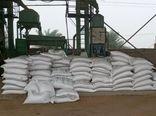 توزیع ۶ هزار و ۵۰۰ تن بذر گندم توسط تعاون روستایی خوزستان