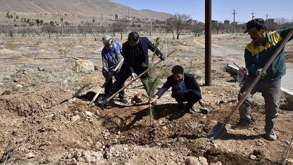 کاشت ۲۵۰ اصله نهال در دانشگاه شهرکرد
