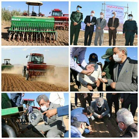 کشت پاییزه گندم در ۸۹۰ هزار هکتار اراضی کردستان آغاز شد