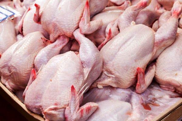 ۱۲ تن مرغ گرم در کاشان توزیع میشود