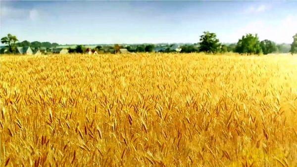 تهیه و توزیع بذور مناسب برای کشاورزان کرمانی