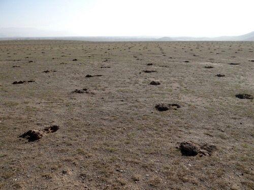 اتمام عملیات اجرایی طرحهای بیولوژیکی و احیای مراتع در آذربایجان غربی