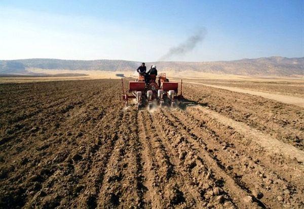 ۹۸ هزار هکتار زمین کشاورزی سقز زیر کشت پاییزه گندم میرود