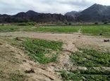 سیل 40 میلیارد تومان خسارت به بخش کشاورزی سیستان و بلوچستان زد