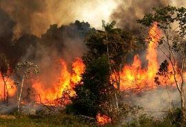 آتش به جان طبیعت، آتش به جان خودمان است