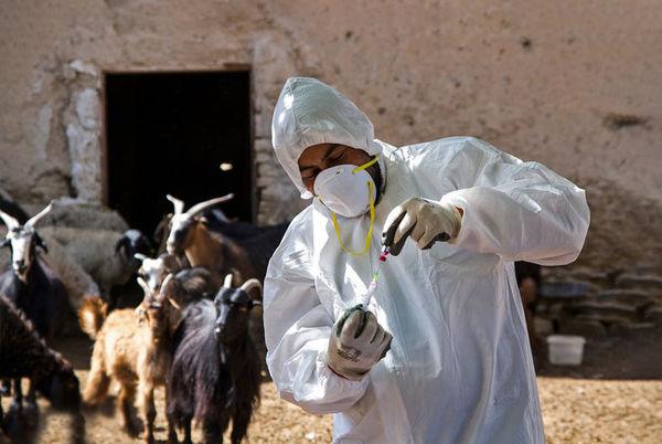 بازار رقابت واکسنهای ایرانی ایجاد کردهایم