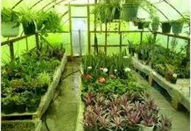 صدور 19 فقره مجوز گلخانه در میاندورود