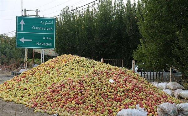 40 مرکز تعاون روستایی آماده خرید تضمینی سیب صنعتی از باغداران آذربایجان غربی
