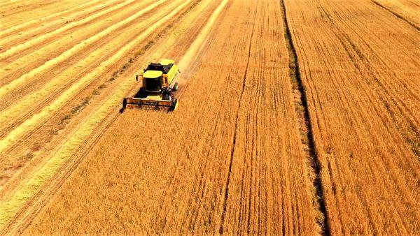 آغاز برداشت جو در 20 هزار هکتار از اراضی کشاورزی
