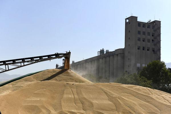 ۱۸هزار تن گندم خوراکی در بورس کالا معامله شد
