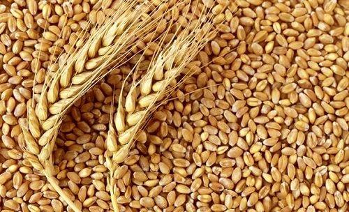 خرید بیش از 23 هزارتن گندم از کشاورزان خرامه ای