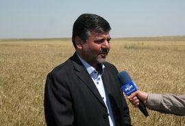 خرید تضمینی ٨٨۵ هزار ۵۰۰ تن گندم و کلزا از کشاورزان گلستانی
