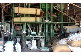 فعالیت 101 واحد شالیکوبی در ساری/ پیش بینی تولید 13 هزار تن شلتوک