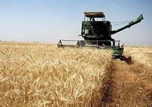 خرید گندم از کشاورزان اصفهان ۲۵ درصد افزایش یافت