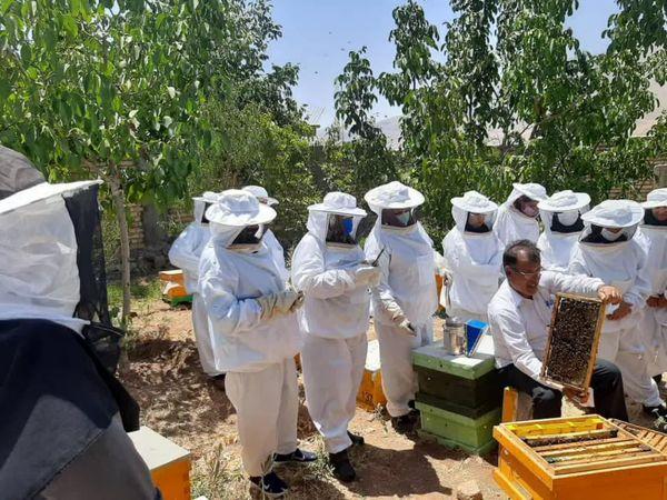 برگزاری دوره آموزشی استحصال ژل رویال و فرآورده های جانبی زنبور عسل