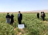 ضرورت ترویج کشت گیاهان دارویی و توسعه سطح زیرکشت این گیاهان در بناب