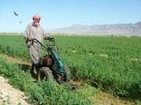 پرداخت22میلیارتومان تسهیلات به کشاورزان سیستان وبلوچستان