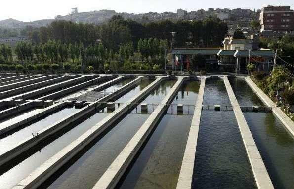 رشد صادرات آبزیان و تولید 2550 تن انواع ماهیان پرورشی در استان البرز