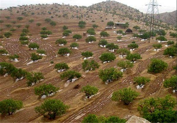 توسعه باغات در سطح  350  هکتار از اراضی شیبدار و کم بازده خراسان شمالی