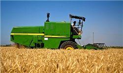 تولید 70 هزار تن گندم از مزارع کازرون