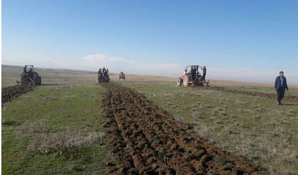 کشت پاییزه بیش از ۱۸۸ هزار هکتار غلات در خراسان شمالی