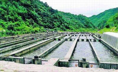 تولیدبیش از 8 هزار تن ماهی سردابی در شهرستان اردل