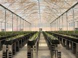 مساحت گلخانه ای شهرستان بروجن به ۱۷ هکتار می رسد