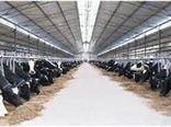 مجتمع گاوداری صنعتی شیروان در آستانه بهره برداری