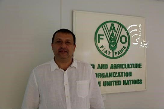 کشاورزی میتواند به تقویت اقتصاد افغانستان کمک کند