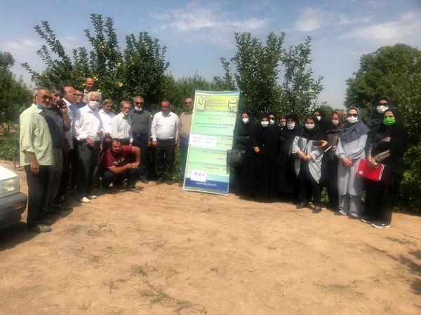 طرح تولید انگور گواهی شده در شهرستان تاکستان اجرا می شود