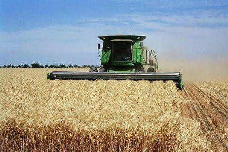 توزیع بیش از 2300 تن بذر گندم گواهی شده و مادری بین کشاورزان گندمکار شهرستان ارزوئیه