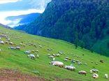 احیای مراتع پارک ملی توران بعد از خشکسالی