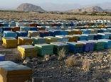 لزوم سرشماری زنبورستانها برای پیشبرد سند راهبردی توسعه زنبورداری کشور
