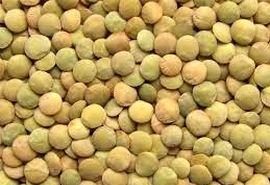 کشت حبوبات عامل کاهش آفات در گندم میشود