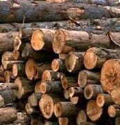 باند قاچاق چوب جنگلی در کوار متلاشی شد