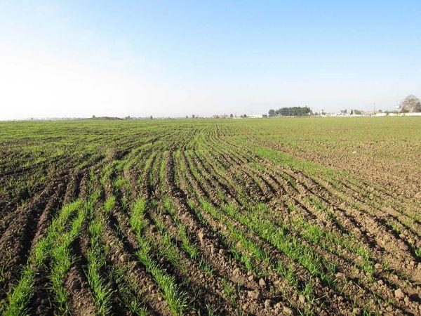 بیش از یک هزار هکتار اراضی کشاورزی در بانه رفع تداخل شد