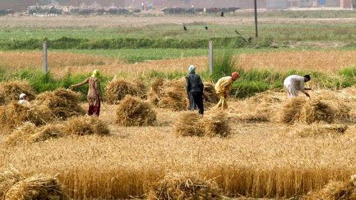 تسهیلات روستایی در شیروان هزار و ۷۱۳ اشتغال ایجاد کرد