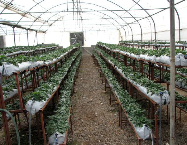 44 میلیون لیتر سوخت در واحدهای تولیدی بخش کشاورزی استان قزوین توزیع شد