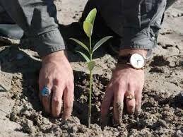ضروری است باغاتی که تولید صادراتی دارند شناسنامهدار شوند