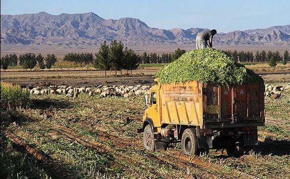 مرکز تبدیل پسماند کشاورزی به علوفه دامی در مهدیشهر راهاندازی شد
