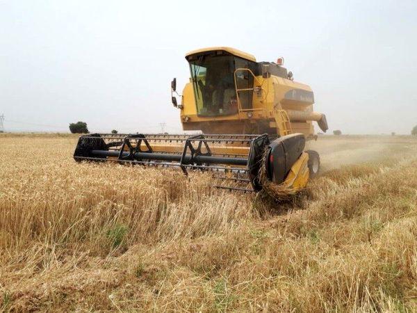 11 هزار تن بذر گندم برای سال زراعی 1400-1399 تامین میشود
