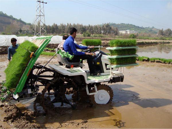 رشد 20 درصدی نشاء مکانیزه برنج در نور