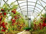 برداشت قریب به 2000 تن گوجه فرنگی از گلخانههای شهرستان بم
