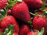 پیشبینی تولید ۵۹ هزار تنی توت فرنگی در کردستان