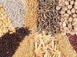 ۱۴ هزار تن بذر گواهی شده آماده تحویل به کشاورزان زنجان است