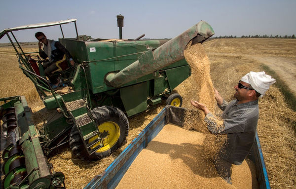 خوزستان بیش از یک میلیون و 200 هزار تن گندم تولید میکند