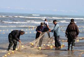 ممنوعیت صید ماهی شیر با روش گوشگیر در منطقه خلیج فارس و دریای عمان