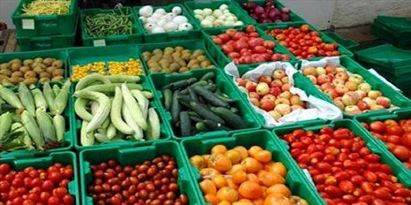 سیاست سازمان جهاد کشاورزی خوزستان تولید محصول سالم است